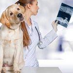 Mutuelle pour chien pas cher / mutuelle chien prix
