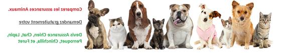 mutuelle pour chien macif