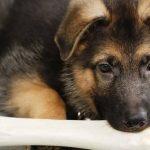 Mutuelle chien prix pour mutuelle chien macif