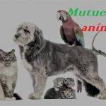 Prix mutuelle chien ou eca mutuelle chien