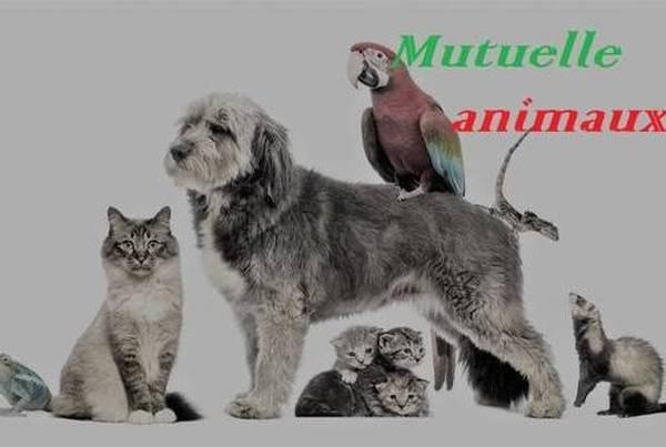 credit mutuel assurance chien