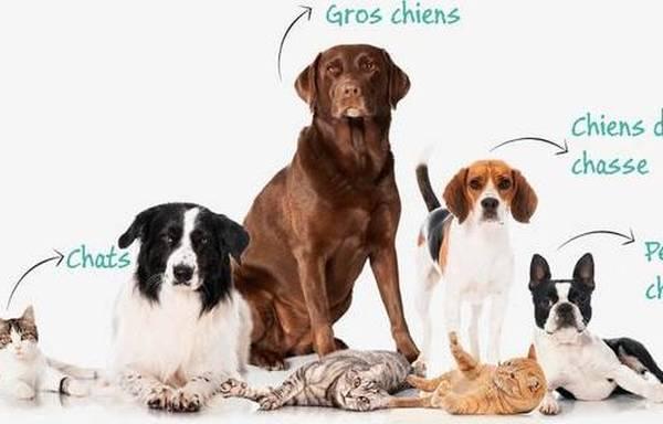 mutuelle pour chien avis