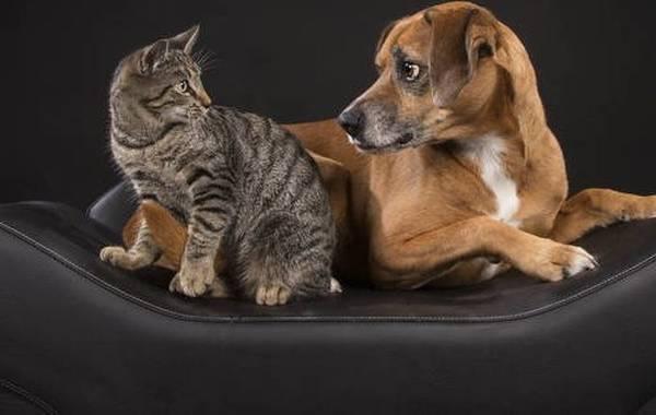 mutuelle chien macif