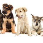 Comparateur mutuelle chien pour mutuelle chien 100