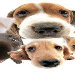 Comparateur mutuelle chien : le lynx mutuelle chien