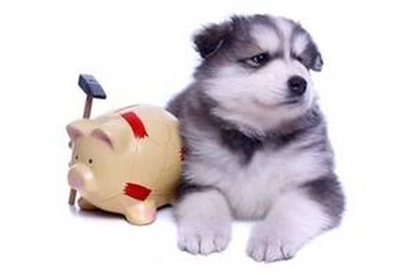bulle bleue mutuelle chien