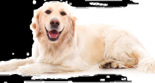 mutuelle chien