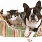 Bulle bleue mutuelle chien ou eca mutuelle chien
