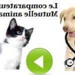Comparateur mutuelle chien chat / mutuelle pour chien macif