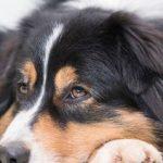 Mutuelle pour chien maaf : mutuelle pour chien prix