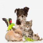 Mutuelle chien 100 pour mutuelle chien macif