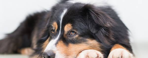 mutuelle pour chien pas cher