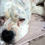 Prix mutuelle chien pour mutuelle chien pas cher
