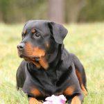 Mutuelle chien prix ou mutuelle santé chien