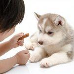 Mutuelle pour chien prix : mutuelle pour chien pas cher