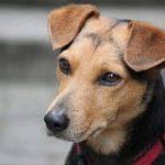 Mutuelle pour chien avis pour mutuelle pour chien pas cher