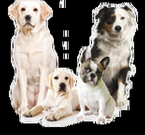 mutuelle pour chien prix