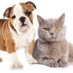 Mutuelle santé chien : mutuelle pour chien pas cher