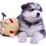 Mutuelle chien tarif ou mutuelle chien pas cher