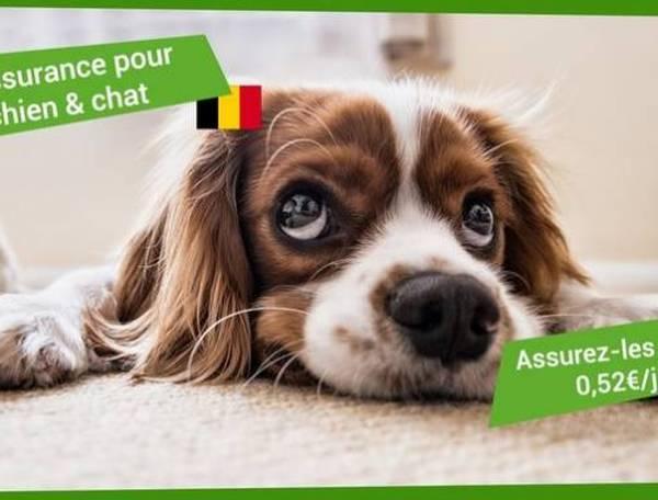 mutuelle pour chien forum
