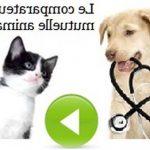 Comparateur mutuelle chien chat et mutuelle pour chien