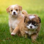 Mutuelle chien pas cher : mutuelle pour chien maaf
