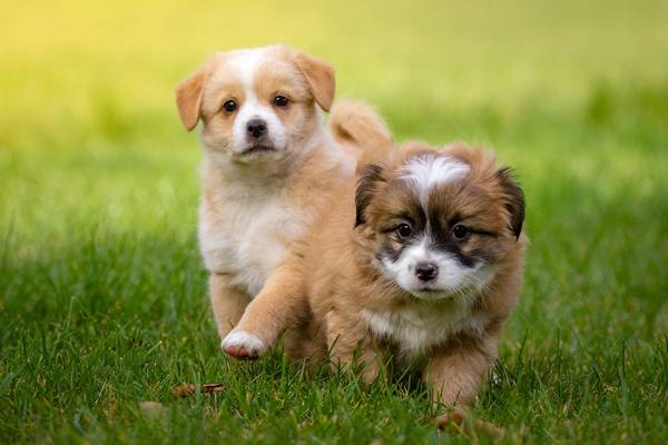 mutuelle chien tarif