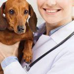 Mutuelle chien pas cher ou mutuelle pour chien forum