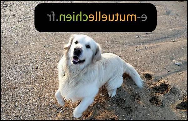 prix mutuelle chien