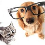 Eca mutuelle chien pour bulle bleue mutuelle chien