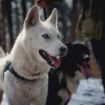 Mutuelle chien pas cher : mutuelle chien carrefour