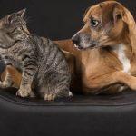 Mutuelle pour chien prix / mutuelle chien macif