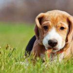 Mutuelle chien pas cher ou mutuelle pour chien matmut