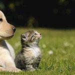 Mutuelle chien pas cher et mutuelle pour chien maaf