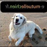 Mutuelle pour chien prix et avis mutuelle chien