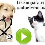 Comparateur mutuelle chien chat et mutuelle chien pas cher