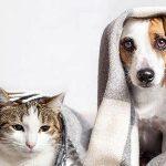 Prix mutuelle chien ou mutuelle chien pas cher