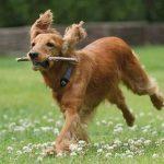 Mutuelle chien pas cher ou mutuelle chien 100