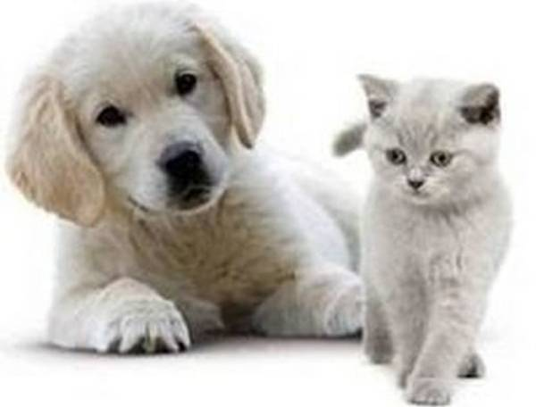 mutuelle chien avis