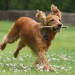 Mutuelle santé chien ou prix mutuelle chien