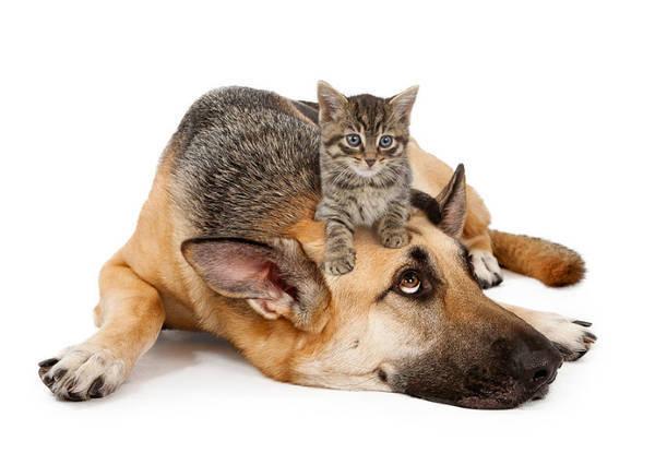 le lynx mutuelle chien