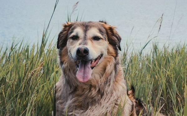 mutuelle pour chien matmut