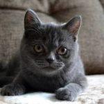 Prix mutuelle chat et assurance chat crédit mutuel