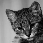 Mutuelle chat comparateur et meilleure mutuelle chat
