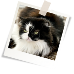 Mutuelle chat tarif : mutuelle pour les chats