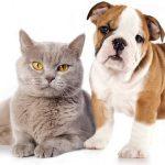 Comparateur mutuelle chien chat ou mutuelle chat
