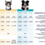 Mutuelle pour chat prix ou mutuelle chat macif