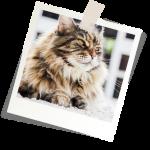 Mutuelle chat avis pour credit mutuel assurance chat