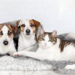 Mutuelle chat pas cher / mutuelle chat maaf