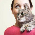 Mutuelle chat avis : meilleure mutuelle chat